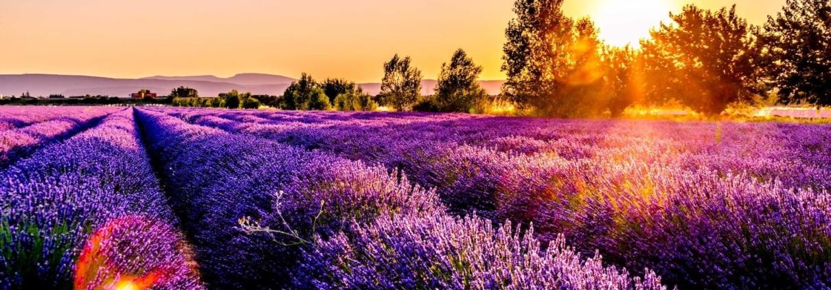 Abilis Export - Provence